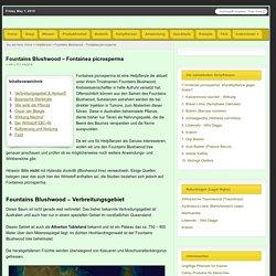 Fontainea picrosperma - Wunderpflanze oder Pusteblume?