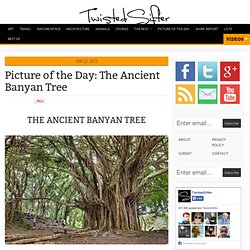The Ancient Banyan Tree