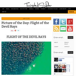 Flight of the Devil Rays
