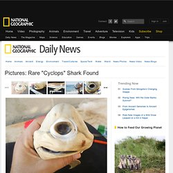 "Pictures: Rare ""Cyclops"" Shark Found"
