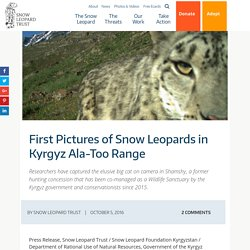 First Pictures of Snow Leopards in Kyrgyz Ala-Too Range - Snow Leopard Trust
