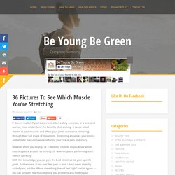 36 Pictures To See Which Muscle You're Stretching - Be Young Be Green