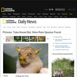 Pictures: Tube-Nosed Bat, More Rare Species Found