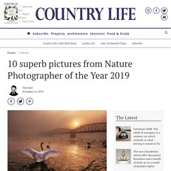 10 superb pictures from Nature Photographer of the Year 2019 - Country Life
