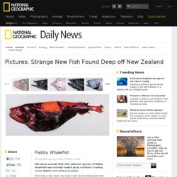 Strange New Fish Found Deep off New Zealand