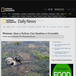 How a Python Can Swallow a Crocodile