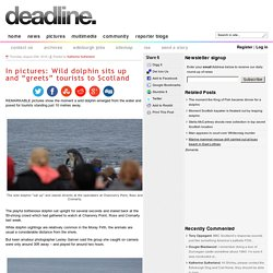 """In pictures: Wild dolphin sits up and """"greets"""" tourists to Scotland"""