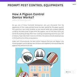 Save Your Property from The Birds by Using Birds Control Devices