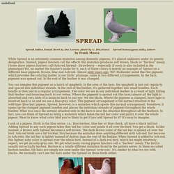 Pigeon Genetics: Spread