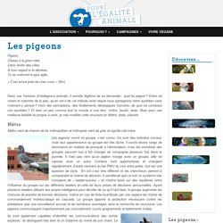 Les pigeons - Association PEA - Pour l'Égalité Animale