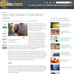 Pigs, Hogs & Boars: Facts About Swine