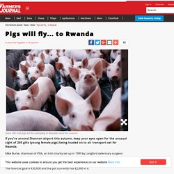 Pigs will fly... to Rwanda