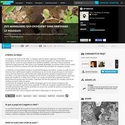 Des manguiers qui croissent sans arrosage : le Nguiguis : Planter les manguiers dans des arbustes de Piliostigma reticulatum (Nguiguis, en Wolof) qui vont assurer l'alimentation en eau