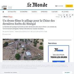 Un drone filme le pillage pour la Chine des dernières forêts du Sénégal