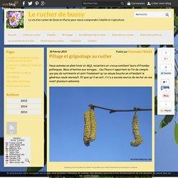 Pillage et grignotage au rucher - Le rucher de bussy