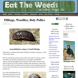 Pillbugs, Woodlice, Roly Pollies