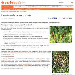 Piment : semis, culture et récolte