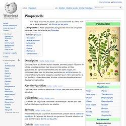 Pimprenelle