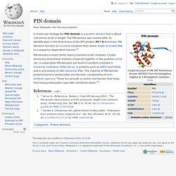 PIN domain