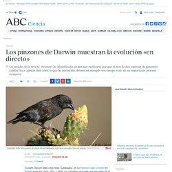 Los pinzones de Darwin muestran la evolución «en directo»