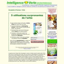 L'ortie piquante: tisane, cuisine, jardin, ortie médicinale