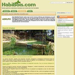 Piscines naturelles : se baigner dans un bassin écologique - Adelfo