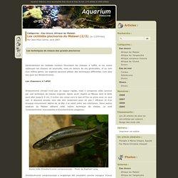 Les cichlidés piscivores du Malawi (2/2) - Eau douce, Afrique lac Malawi - Aquarium Webzine, l'aquariophilie d'eau douce et d'eau de mer