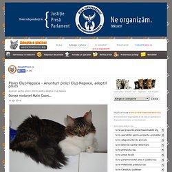 Pisici Cluj-Napoca - Anunturi pisici Cluj-Napoca, adoptii pisici
