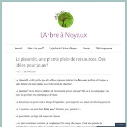 Le pissenlit, une plante plein de ressources: Des idées pour jouer! – L'Arbre à Noyaux
