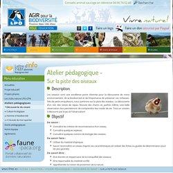 Sur la piste des oiseaux - LPO PACA - Ligue pour la Protection des Oiseaux