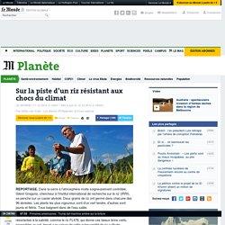 LE MONDE PLANETE 11/12/12 Sur la piste d'un riz résistant aux chocs du climat