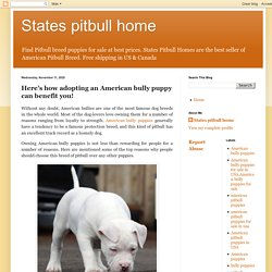 States pitbull home: Here's how adopting an American bully puppy can benefit you!