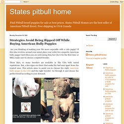 States pitbull home: Strategies Avoid Being Ripped Off While Buying American Bully Puppies