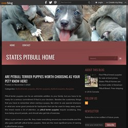 Are pitbull terrier puppies worth choosing as your pet? Know here! - States pitbull home