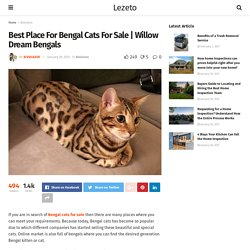 Best Place For Bengal Cats For Sale