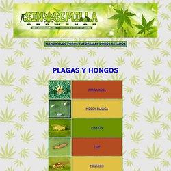 PLAGAS Y HONGOS