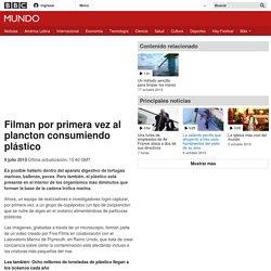 Filman por primera vez al plancton consumiendo plástico - BBC Mundo