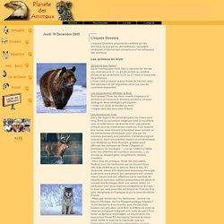 Planete des Animaux - Dossiers - Les animaux en hiver