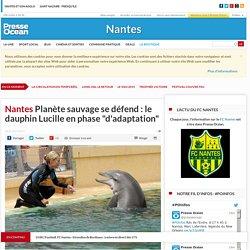 """Planète sauvage se défend : le dauphin Lucille en phase """"d'adaptation"""""""