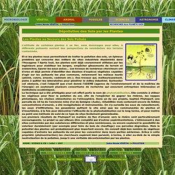 Monde Végétal -> Dépollution -> Dépollution des Sols par les Plantes