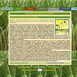 D pollution phyto puration pearltrees - Depollution par les plantes ...