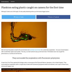 Plankton eating plastic caught on camera for the first time