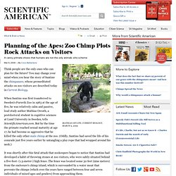 Planning of the Apes: Zoo Chimp Plots Rock Attacks