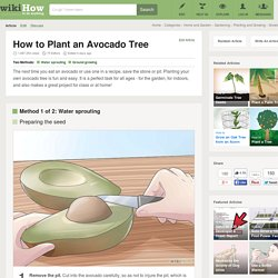 How to Plant an Avocado Tree: 16 Steps