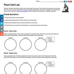 onion cell lab worksheet. Black Bedroom Furniture Sets. Home Design Ideas
