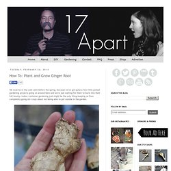 17 Apart: How To: Plant and Grow Ginger Root
