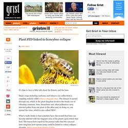 Plant STD linked to honeybee collapse