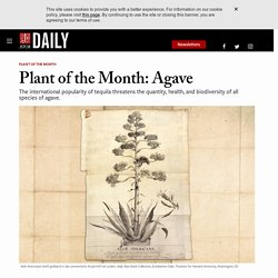 Plant of the Month: Agave