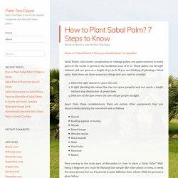 How to Plant Sabal Palm? 7 Steps to Know – Palm Tree Depot