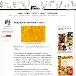 Why not plant some Calendula?